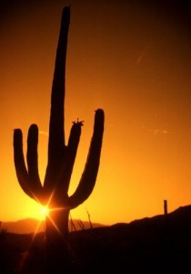 Sunrise in the southwestern desert